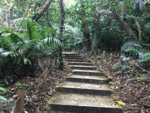 ヤエヤマヤシの階段