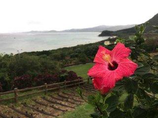 1 月2月の石垣島も楽しい!の画像